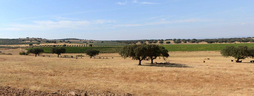 Le paysage de l'Alentejo en septembre
