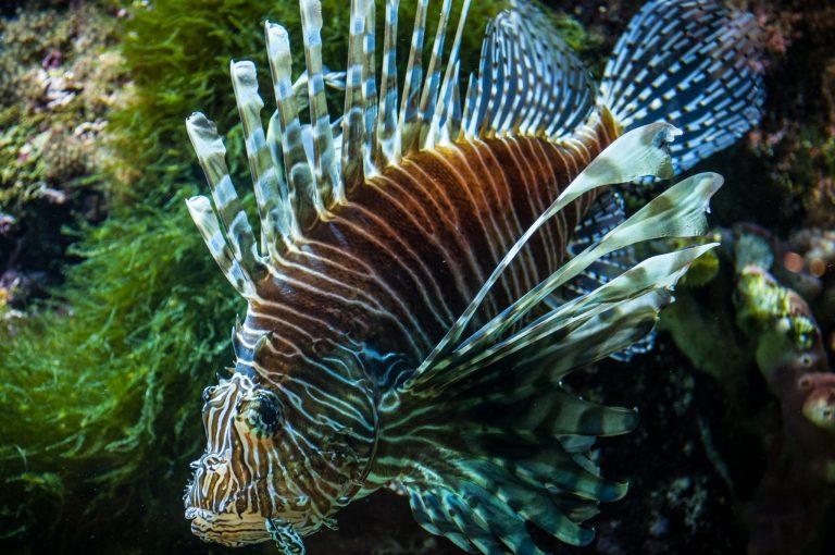 Poisson exotique à Océanopolis