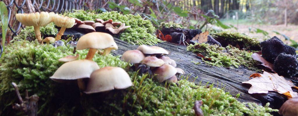 S'occuper quand il pleut : la cueillette des champignons
